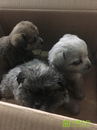 三只可爱的小狗