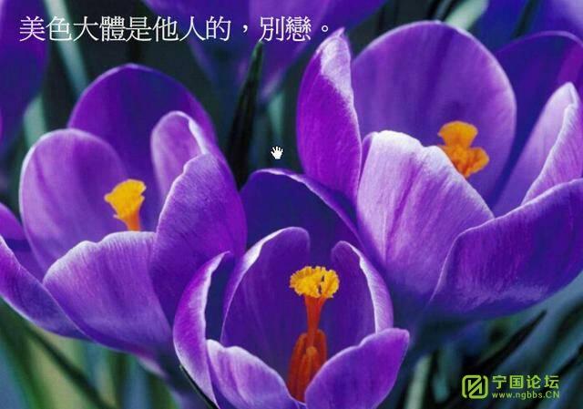 平衡人生 - 宁国论坛 - 214018ti66bcmbpv88ol9z.jpg