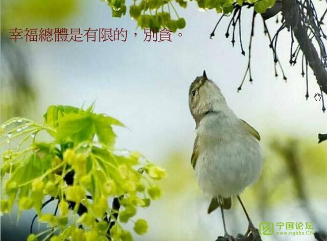 平衡人生 - 宁国论坛 - 214019uf6zcg68ji1z5zj9.jpg