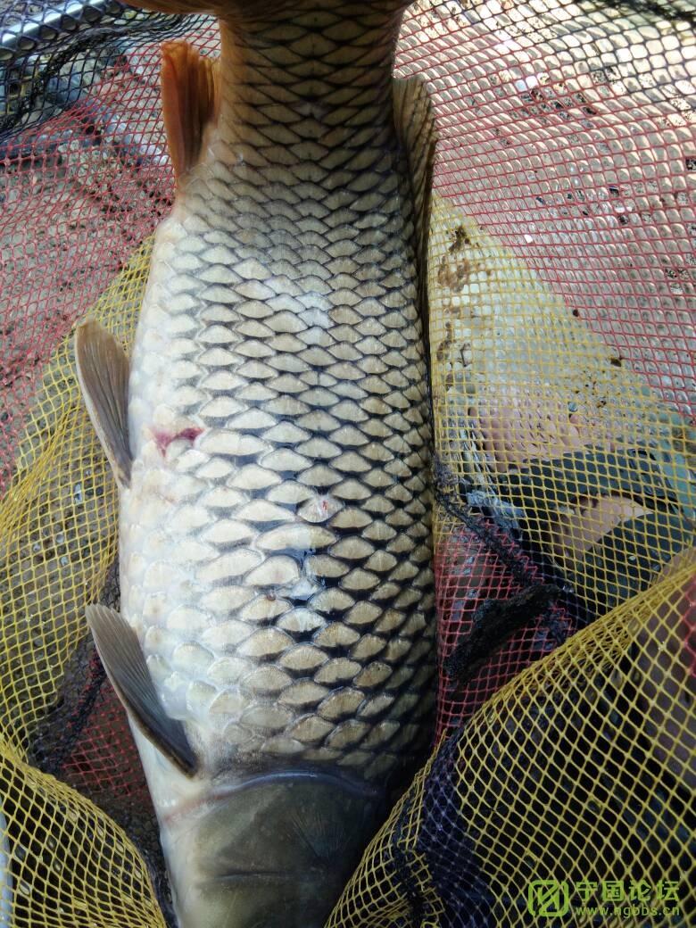几天没发鱼获了,特地去钓一天装个X - 宁国论坛 - 113801bolcm5zwz5c0diwn.jpg