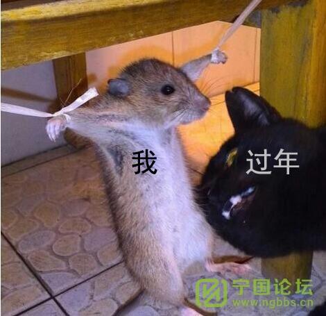 (道听图说第一百六十期)祝灌水兄弟姐妹新年快乐! - 宁国论坛 - 2.jpeg
