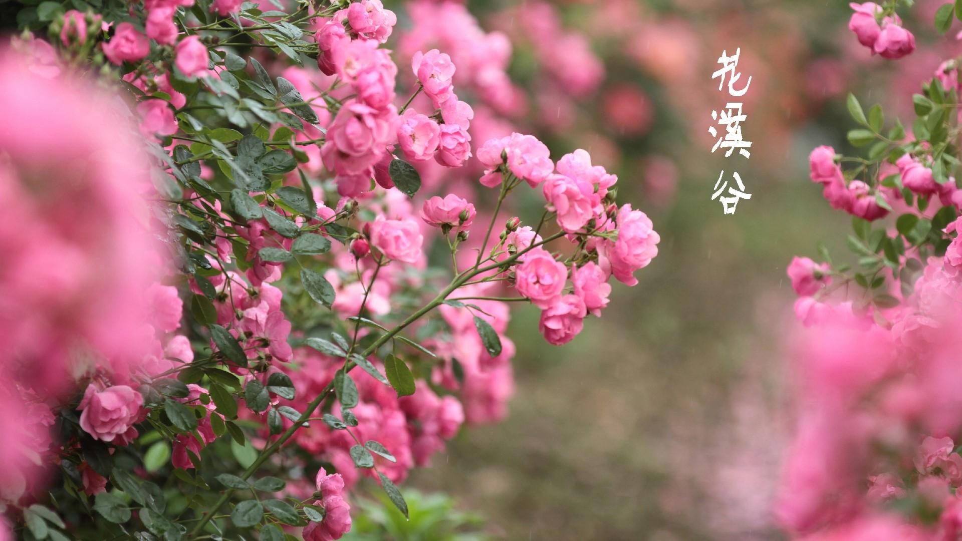 畲乡。花溪谷 - 宁国论坛 - a158e0638f080c0.jpg