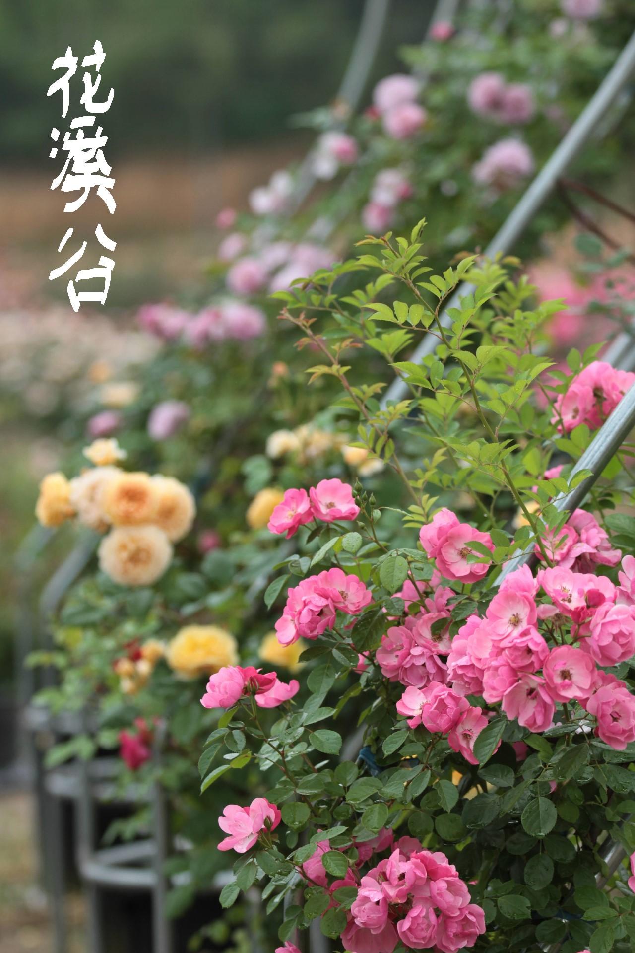 畲乡。花溪谷 - 宁国论坛 - fe201a727835c5e.jpg