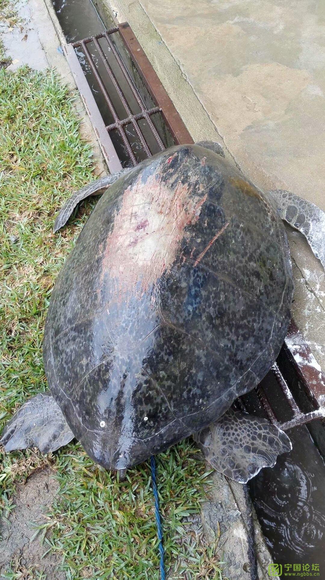 加纳风光-好久没发了 - 宁国论坛 - 大海龟-后来放生了