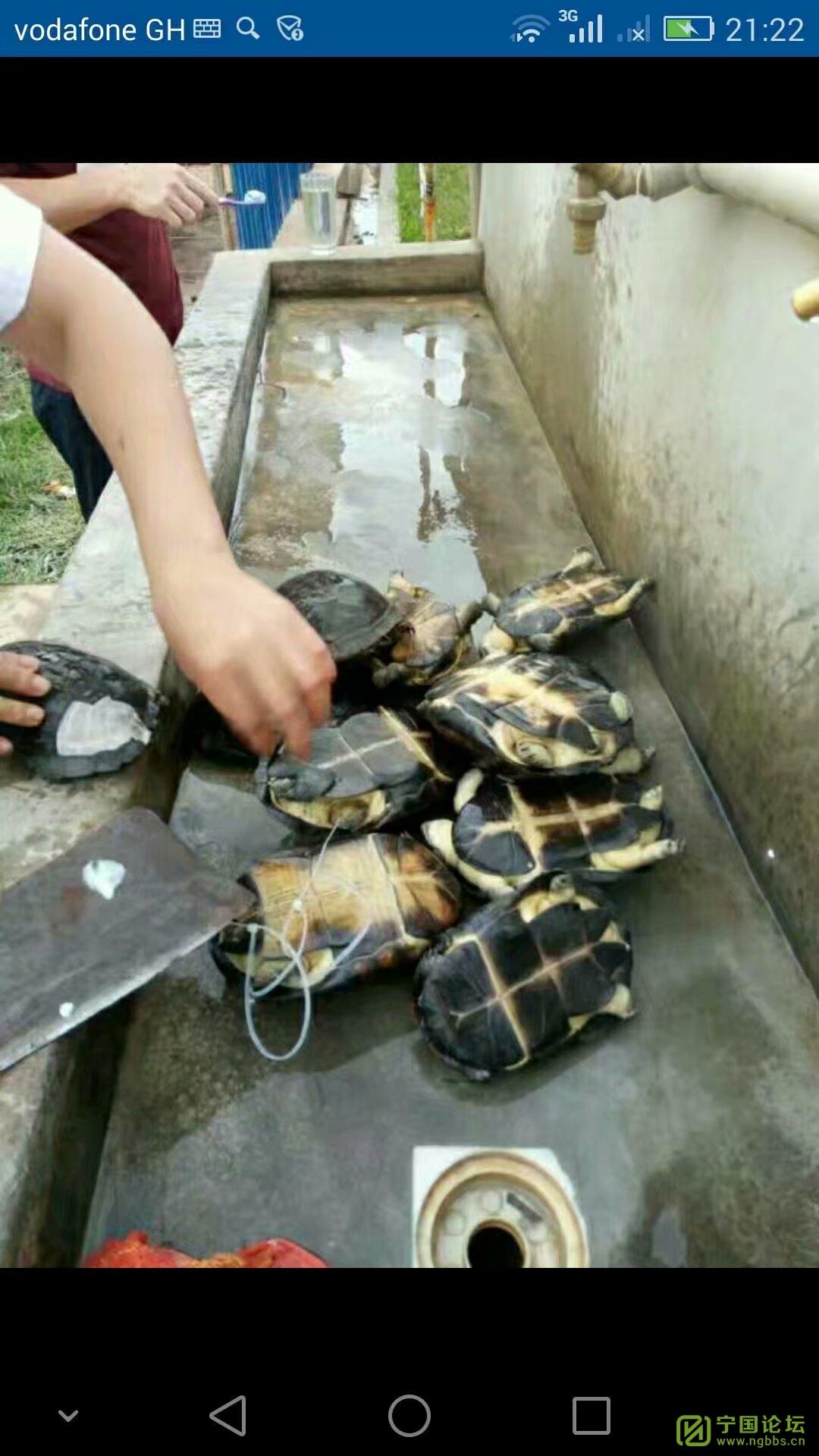 加纳风光-好久没发了 - 宁国论坛 - 乌龟太多了
