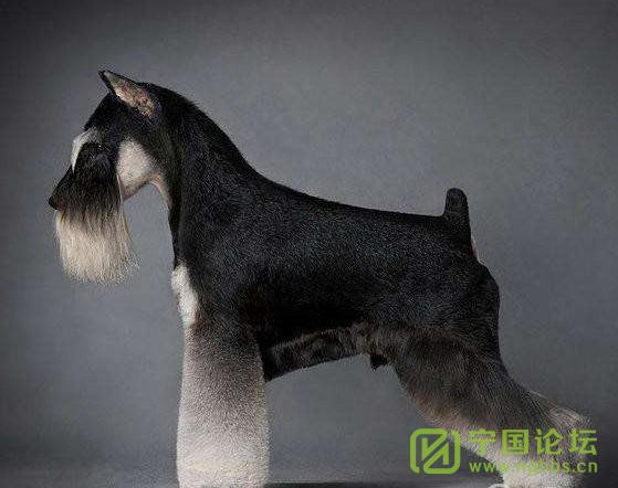 热烈庆祝宁国市爱宠爱宠宠物连锁2店盛大开业 - 宁国论坛 - 宠物造型3.png