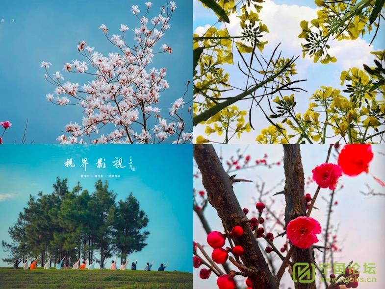 周一见:春雨惊绿起/总第245期 - 宁国论坛 - WechatIMG322.jpeg