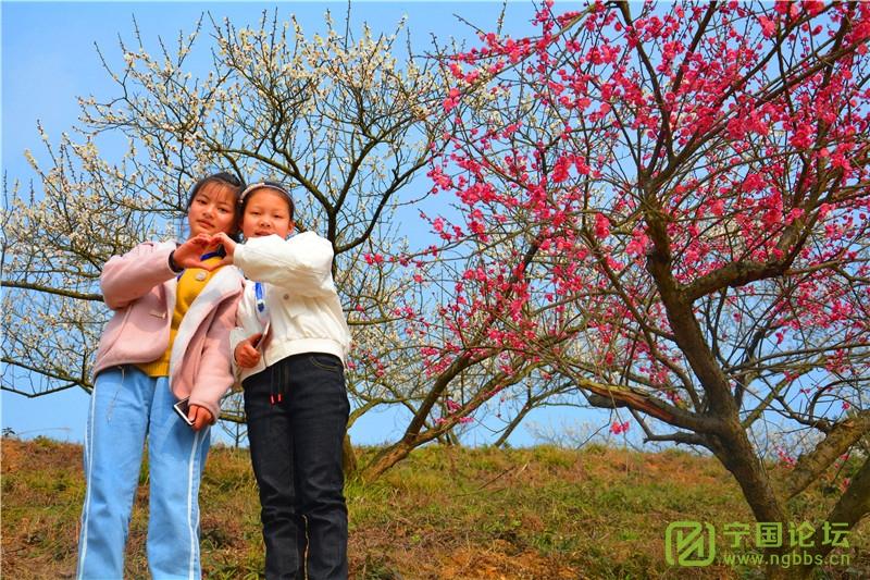 """又到一年赏花时!""""高桥赏梅亲子春游活动""""成功举办! - 宁国论坛 - 9.jpg"""