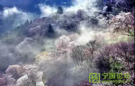 """四月踏青何处去,宁国""""花花世界""""迷人眼! - 宁国论坛 - 8.jpg"""