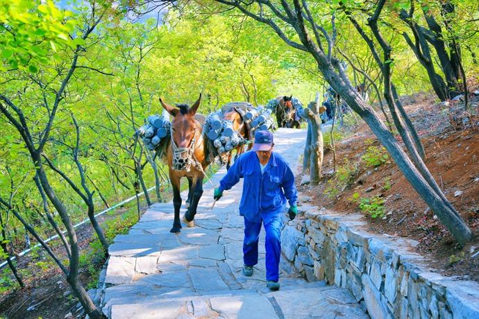 初夏京郊必去奇景,坡峰岭2000亩黄栌花开的漫山粉黛 - 宁国论坛 - 10.jpg