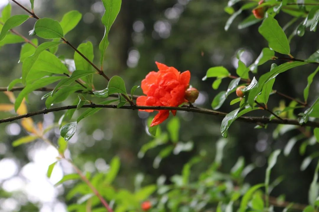 一周美景   是雨,也是韵 - 宁国论坛 - 微信图片_20200622084740.jpg